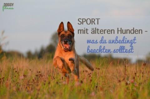 Sport mit älteren Hunden – was du unbedingt beachten solltest