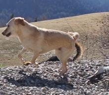 Zappelhunde: Vom Leben mit überaktiven Hunden oder auch Monster brauchen Liebe