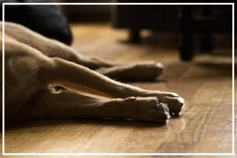 Stabile Seitenlage & Reanimation beim Hund