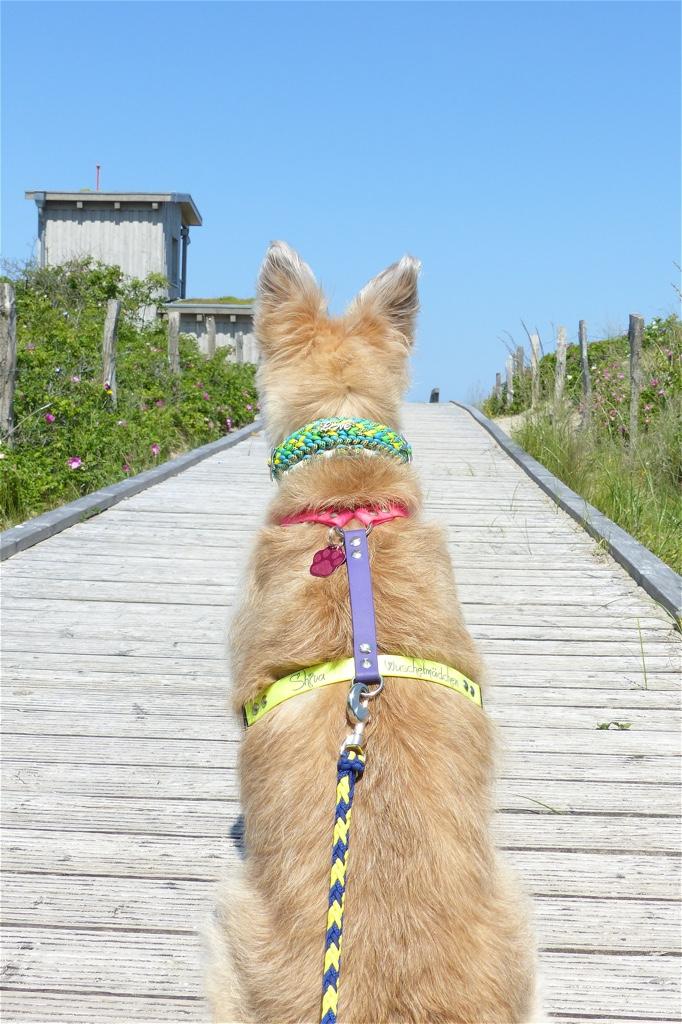 Sommerurlaub mit Hund