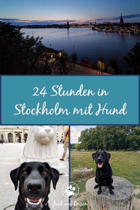 24 Stunden in Stockholm mit Hund