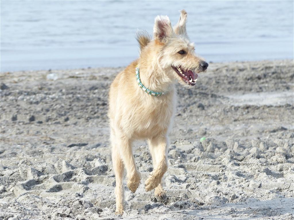 Strand mit Hund