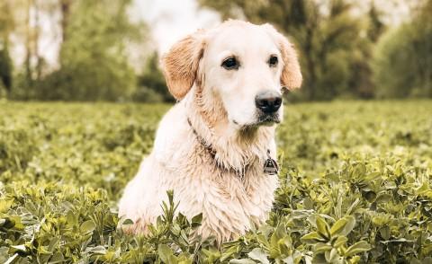 Stress bei Hundebegegnungen: Antworten finden
