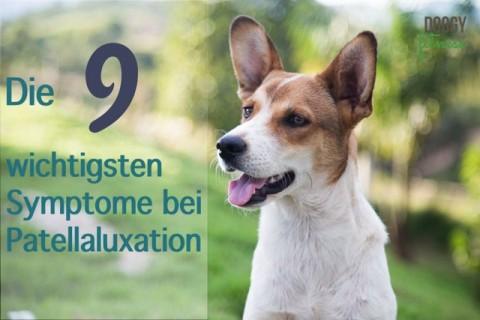 Diese 9 wichtigste Symptome der Patellaluxation beim Hund solltest du kennen!