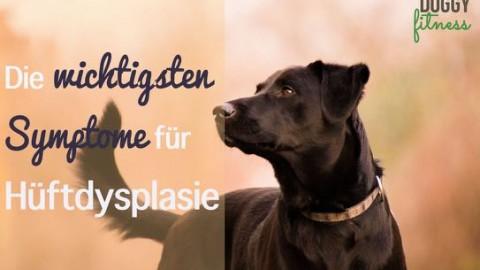 Diese Symptome für Hüftdysplasie beim Hund solltest du kennen!