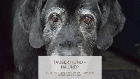 Tauber Hund… Na und?