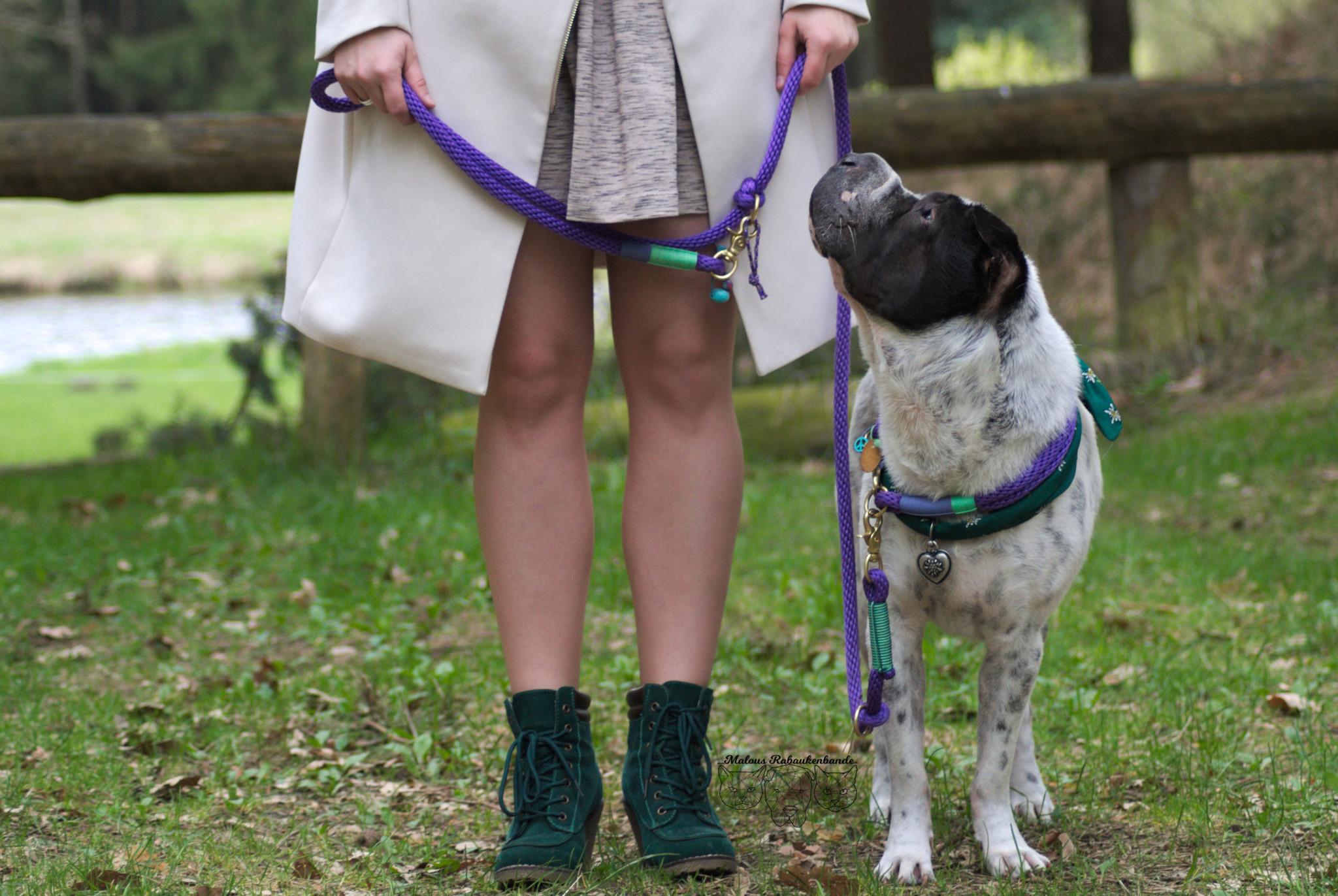 Test Blog Hundeblog Hund Shar Pei D.Dogs 740 Leine Halsband Werbung kostenlos Empfehlung Meinung Fazit