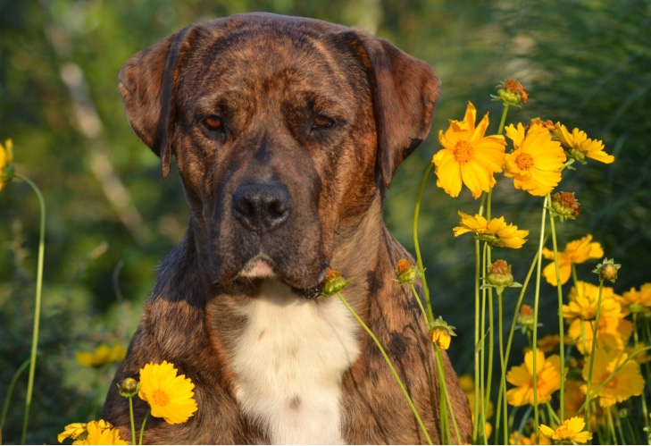 Therapeut Hund