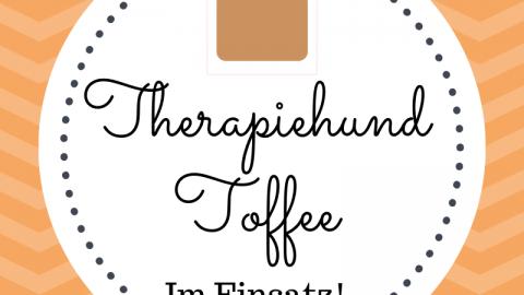 Therapiehund Toffee im Einsatz [Werbung]