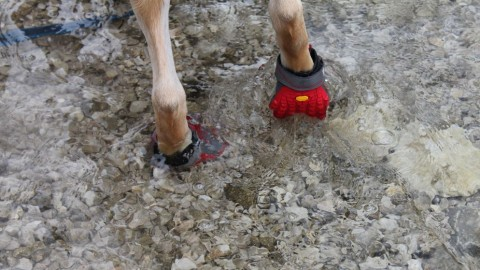 [Werbung] These Boots Are Made for Hiking oder Hundeschuhe im Test