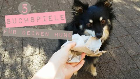 5 Suchspiel Ideen für deinen Hund – Ideal bei Regenwetter