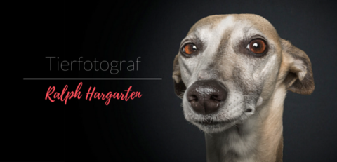 Tierfotograf Ralph Hargarten