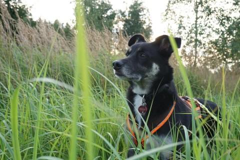 Tierkommunikation Teil 1: Meine Sicht der Dinge
