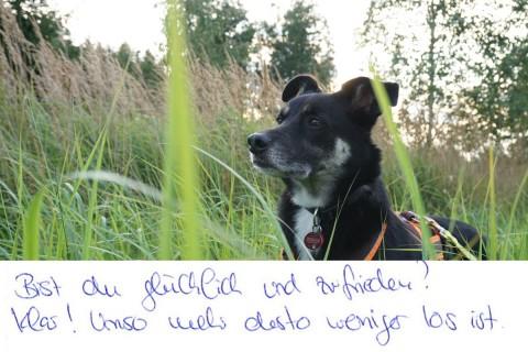 Tierkommunikation Teil 2: Zehn Fragen, zehn Antworten