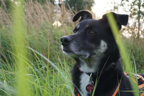 Tierkommunikation Teil 3: mein Fazit