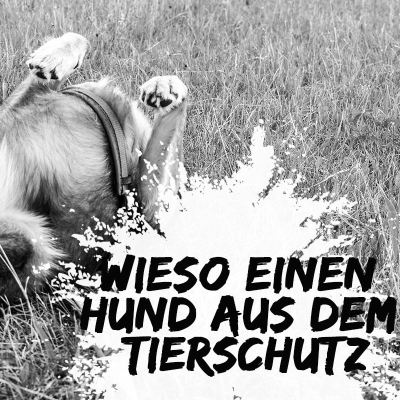 tierschutzhund-hund-aus-dem-ausland