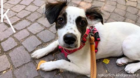 Pflegestelle für Hunde aus dem Süden?