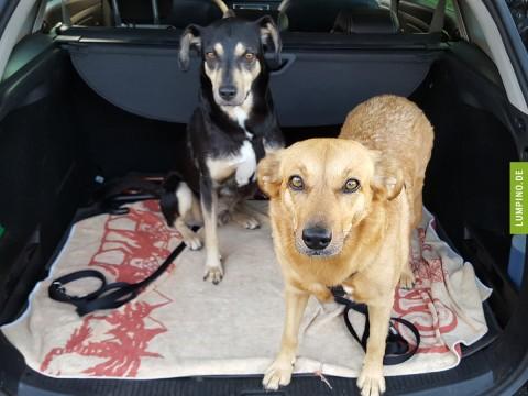 Tierschutz oder Züchter? Teil 1 – Tina und Tommy aus Rumänien