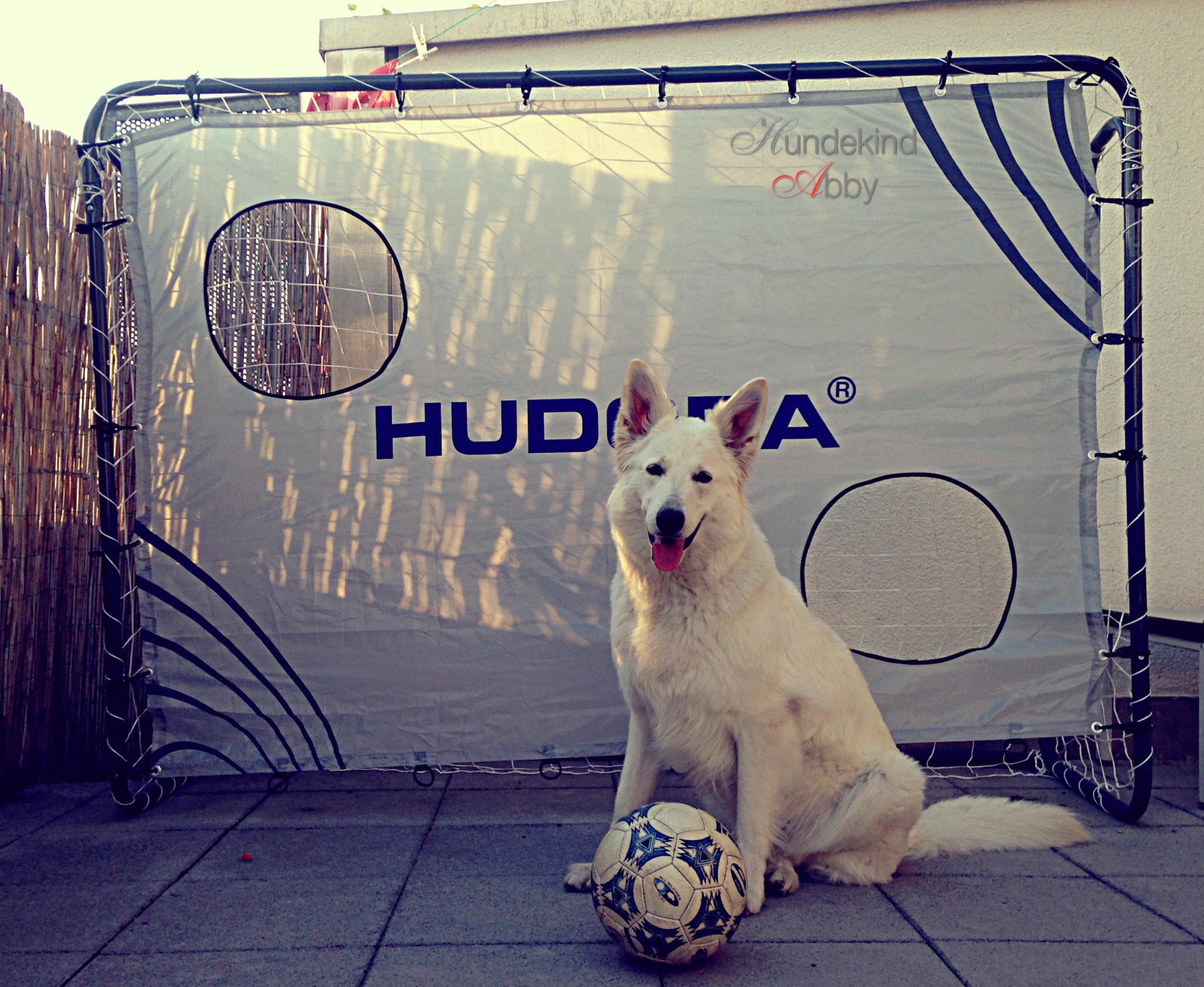 Hund tippt Europameister