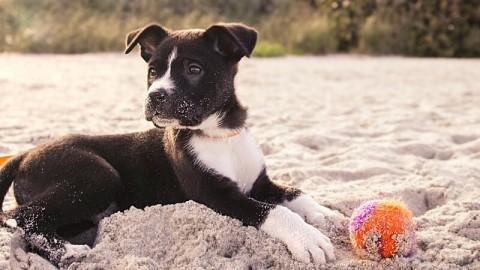 Das große Sommer-Spezial zum Urlaub mit Hund