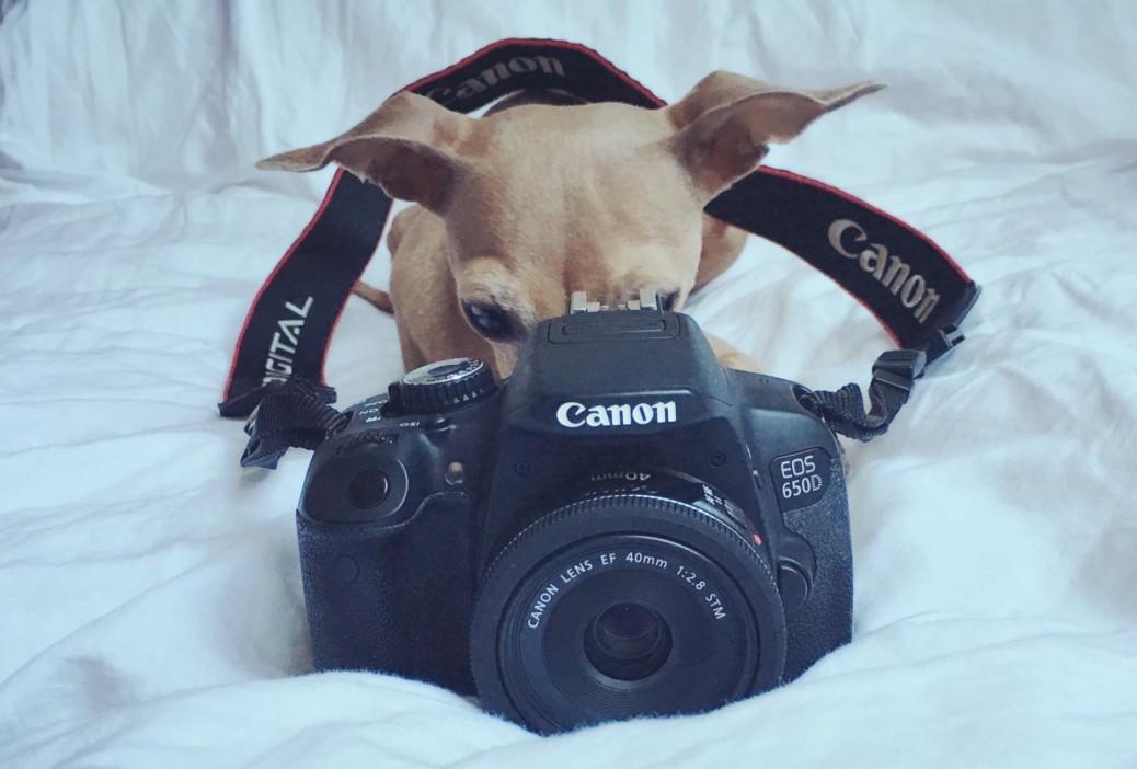 Tipps für zauberhafte Fotos von Hunden.