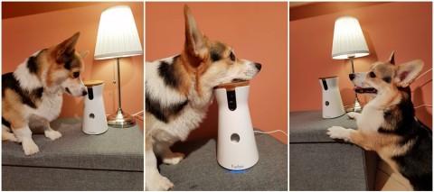 [Produktplatzierung] Die Furbo Hundekamera – Bin ich jetzt ein Helikopterfrauchen?