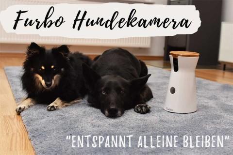 Gewinne eine Furbo Hundekamera! [Anzeige]