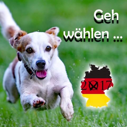 Geh wählen! Mit Hund!
