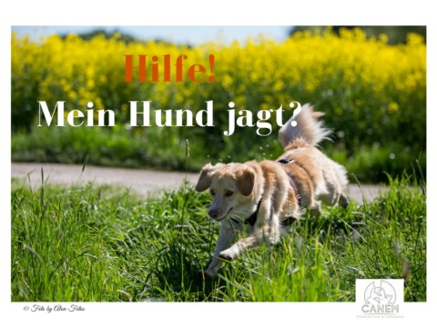 Hilfe, mein Hund jagt?