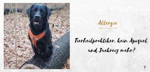 Allergie Update #4: Tierheilpraktiker, kein Apoquel und Juckreiz mehr?