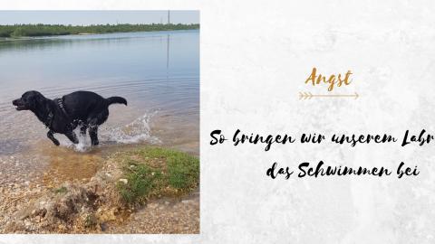 So bringen wir unserem Labrador das Schwimmen bei