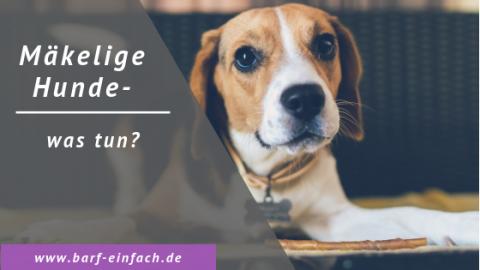 Mäkelige Hunde – was tun?