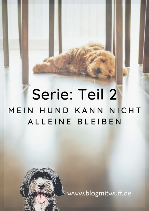 Serie: Mein Hund kann nicht alleine bleiben | Teil 2