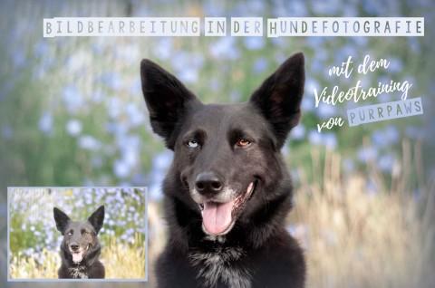 JUST YOU – mit dem Videotraining von Purrpaws zu perfekten Hundefotos