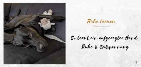 So lernt ein aufgeregter Hund Ruhe & Entspannung