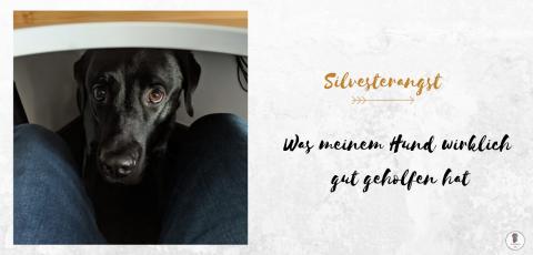 Silvesterangst: Was meinem Hund wirklich gut geholfen hat
