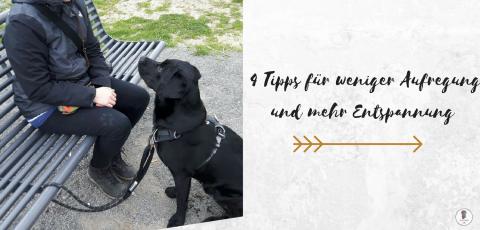 Der aufgeregte Hund: Warum man mit einem Spinnerhund anders umgehen muss