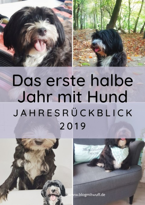Das erste halbe Jahr mit Hund – Jahresrückblick 2019