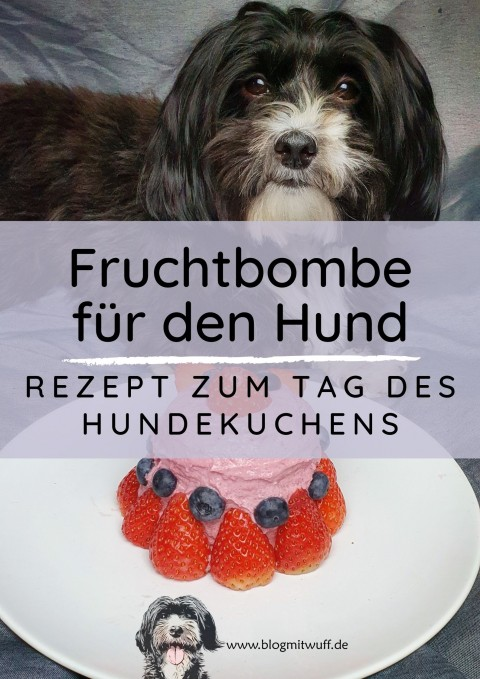 Fruchtbombe für Hunde