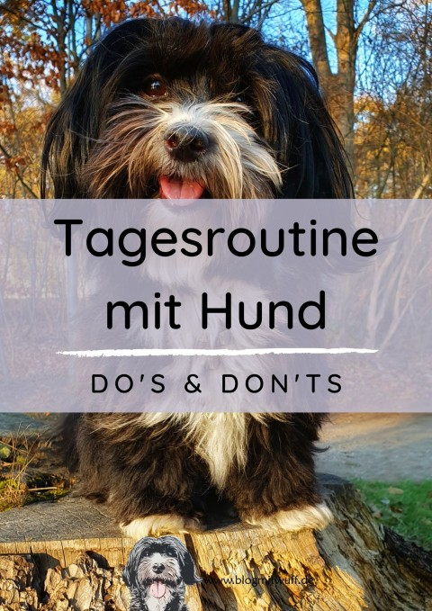 Tagesroutine mit Hund – Dos & Don'ts