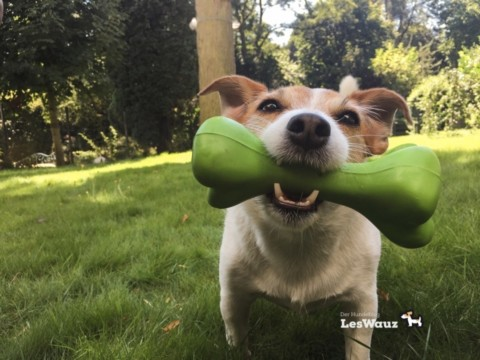 Eure Stimme als Werkzeug: wie verbessere ich die Kommunikation mit meinem Hund?