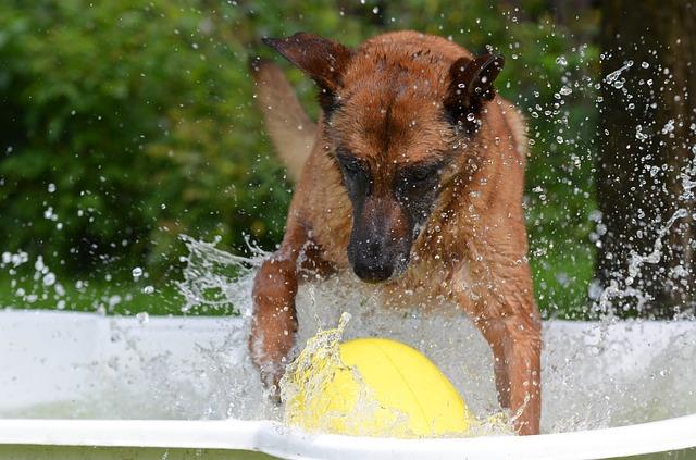Training im Sommer - Tipps - Hundesport Nubi (2)