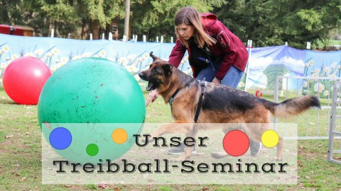 Unser Treibball-Seminar