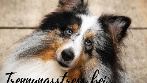 Trennungsstress bei Hund & Mensch