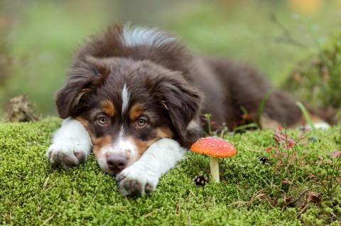 Die wichtigsten Infektionskrankheiten bei Hunden V