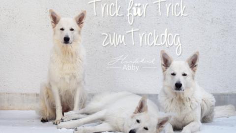 TRICK FÜR TRICK ZUM TRICKDOG: TASCHENTUCH BRINGEN