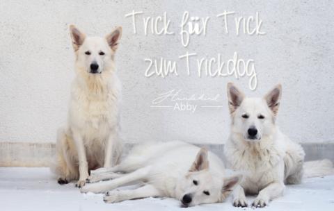 TRICK FÜR TRICK ZUM TRICKDOG: IN EINE BOX STEIGEN