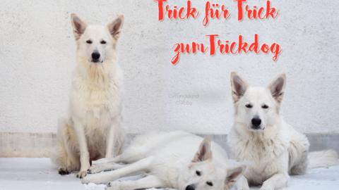 TRICK FÜR TRICK ZUM TRICKDOG: TÜREN SCHLIESSEN