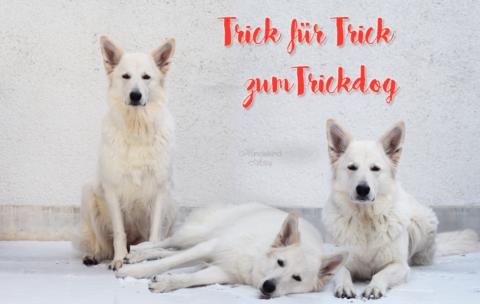 Trick für Trick zum Trickdog – Socke ausziehen