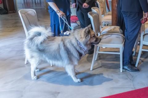 Hochzeit mit Hund – Eine gute Idee?